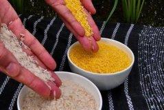 武汉转基因水稻调查:随机买5袋米3袋含转基因