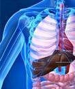 恶性肿瘤的病例介绍