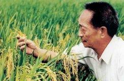 袁隆平:吃转基因水稻致不育其实是误读
