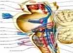 颅内海绵状血管瘤症状有什么