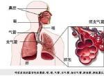 肺癌治疗的中药方有哪些