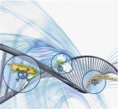 欧盟表决是否拒绝成员国禁止转基因食品、饲料