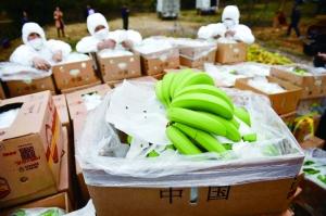 深圳销毁菲律宾农药残留超标香蕉