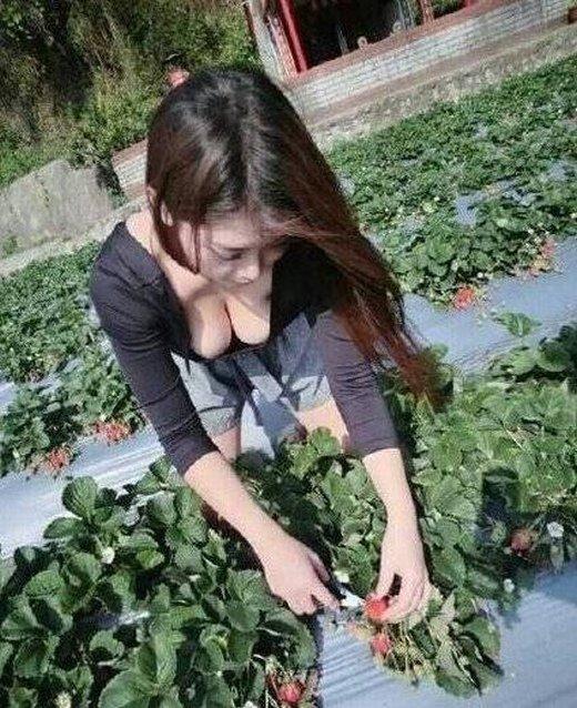 这就是我喜欢摘草莓的原因