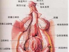 男性护理:男人生殖器保健的方法