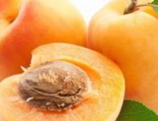 介绍杏的营养价值