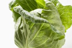 卷心菜的功效与作用有哪些