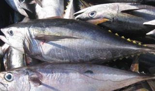 海鱼的做法大全有哪些