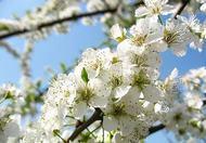 春季饮食需当心 这五类食物可引发中毒