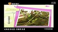 老潍县传统菜--香椿拌豆腐