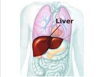 药物性肝硬化