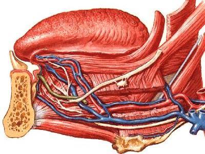 舌下腺囊肿百科