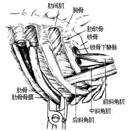 骨膜炎百科