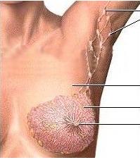 乳腺增生百科