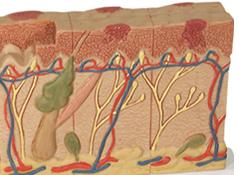 皮肤癌百科