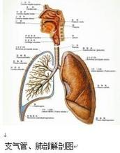 慢性支气管炎百科