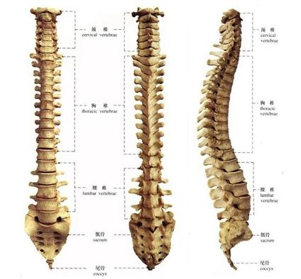 腰椎病百科