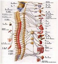 脊髓血管病