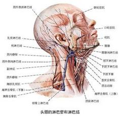 淋巴瘤百科
