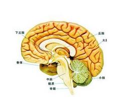 脑胶质瘤百科