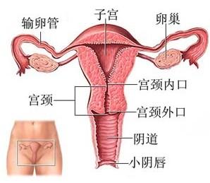 阴道炎百科