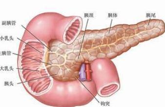 胰腺癌百科