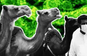 中东呼吸综合征