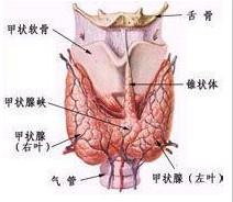 甲状腺次全切除术