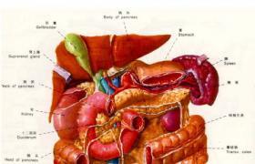 胆囊十二指肠吻合术