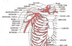 锁骨下动脉(颈总动脉)-静脉-颈外动脉(颞浅动脉)吻合术+颞