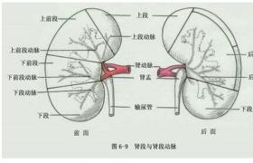 治疗性肾动脉栓塞术