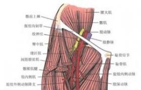 股动脉交感神经网剥脱切除术