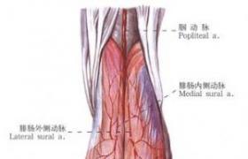 吻合血管的皮瓣移植术
