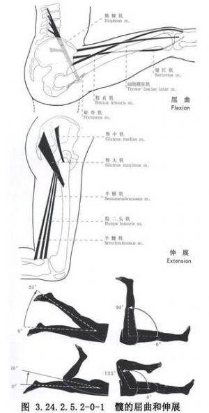 盆底肌松解术-髂腰肌松解延长术