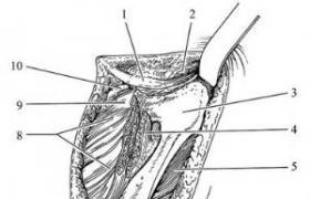 部分骨盆切除术