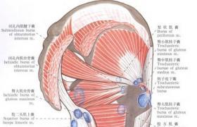 坐骨-臀肌滑囊切除术
