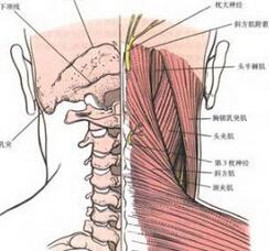 颈椎单开门式颈椎管成形术
