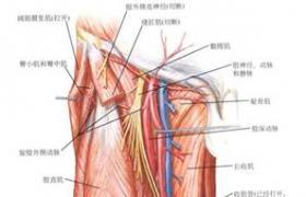 股动脉-腘动脉-胫前动脉复合血管序贯搭桥术