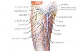 股动脉-腘动脉-胫前动脉人工血管序贯搭桥术
