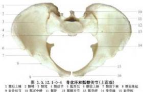 骨盆骨折切开复位螺钉内固定术