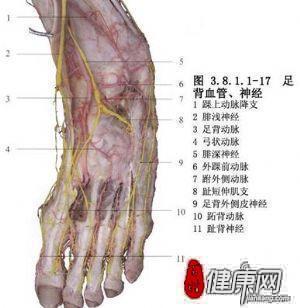 具有类似手掌的皮肤结构