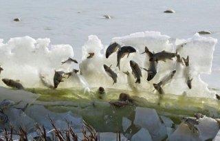 空中飞鱼!自然公园现奇景 鱼被凌空冰封在空中
