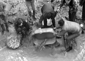 渔民捕获野生中华鲟 将其重新放归大海