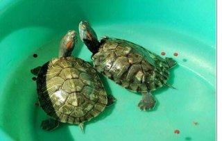 10岁的孩子能吃乌龟吗?值得你关注一下