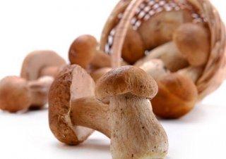 3岁小孩能吃蘑菇吗?蘑菇的作用有哪些