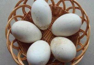 6个月的婴儿能吃鹅蛋吗?宝宝吃鹅蛋的做法