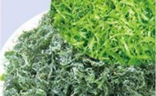 4岁儿童能吃螺旋藻片吗,了解螺旋藻副作用的经过