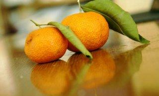 7个月小孩能吃橘子吗?宝宝吃橘子的好处