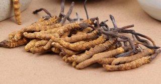 7岁小孩能吃虫草吗?不宜食用虫草的人群有哪些