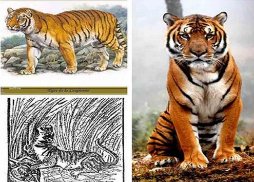 永远无法再见,盘点近代中国被宣告灭绝的15种珍稀物种
